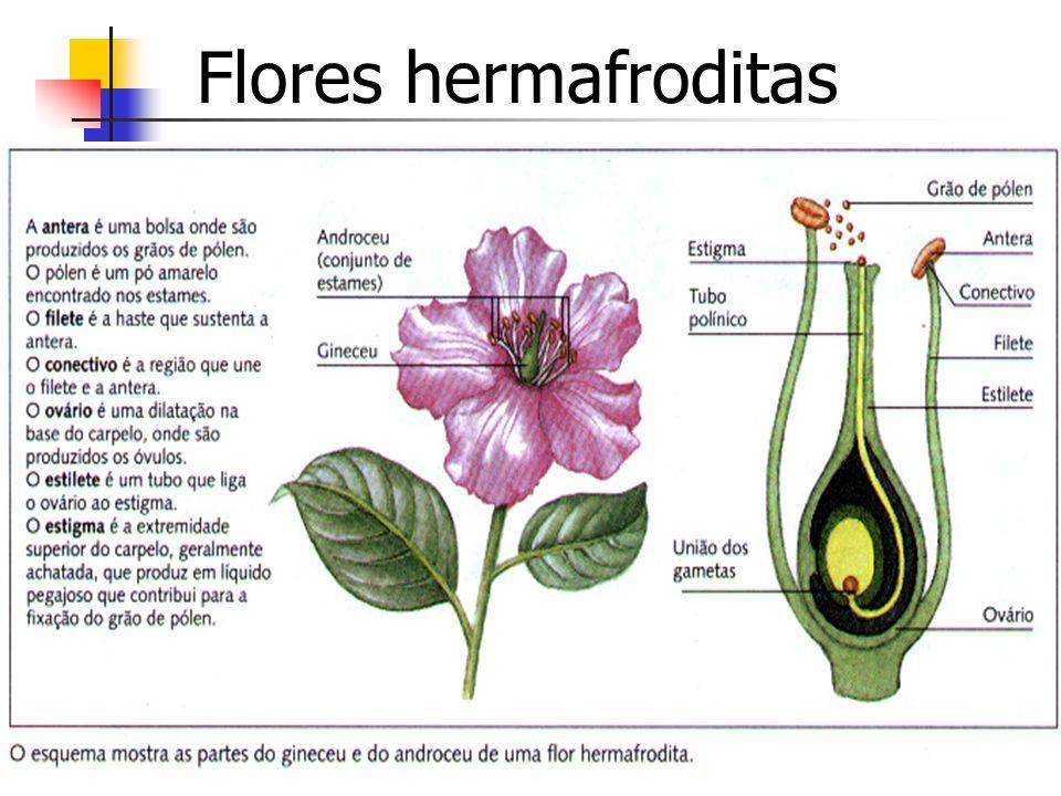 Flores hermafroditas
