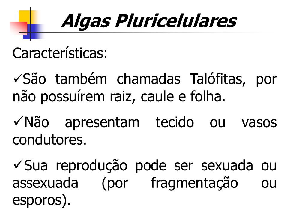 Algas Pluricelulares Características: