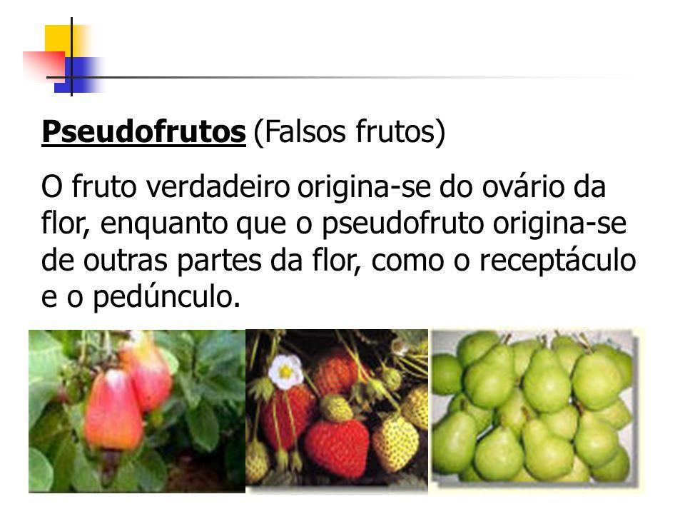 Pseudofrutos (Falsos frutos)