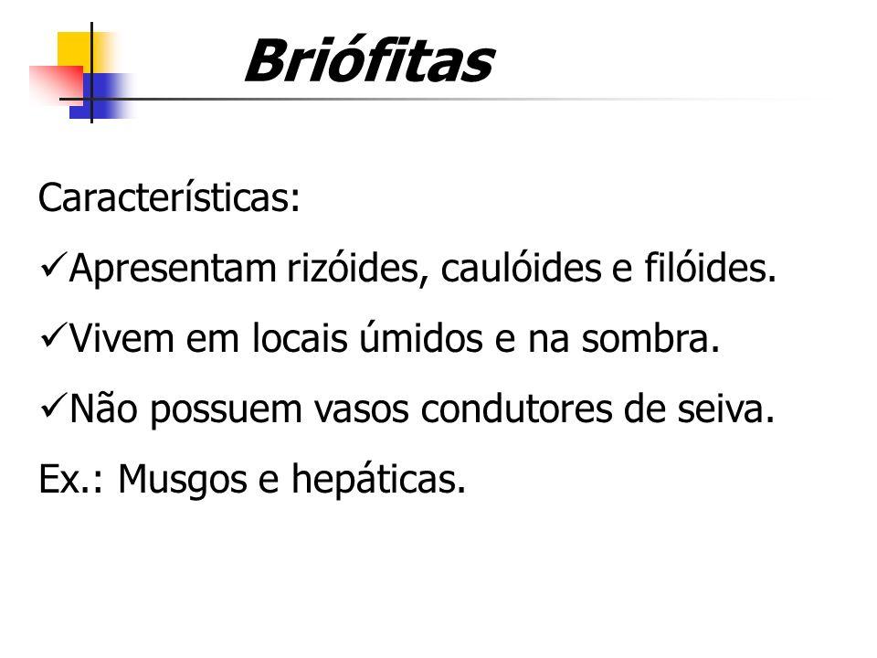 Briófitas Características: Apresentam rizóides, caulóides e filóides.