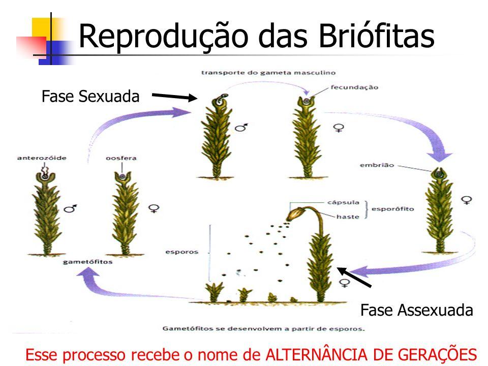 Reprodução das Briófitas