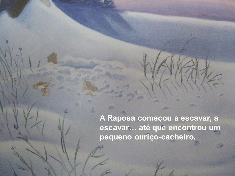 A Raposa começou a escavar, a escavar… até que encontrou um pequeno ouriço-cacheiro.