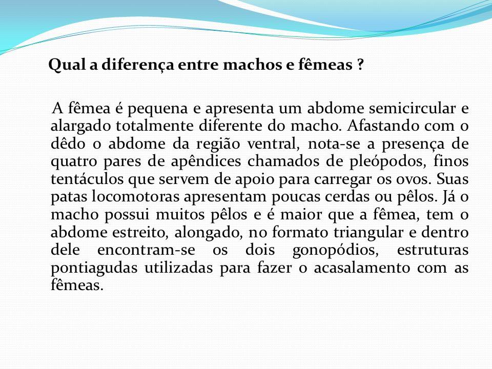 Qual a diferença entre machos e fêmeas