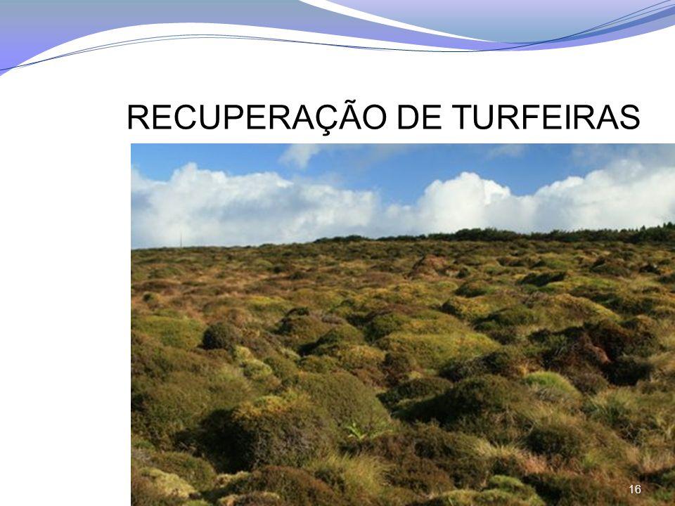RECUPERAÇÃO DE TURFEIRAS