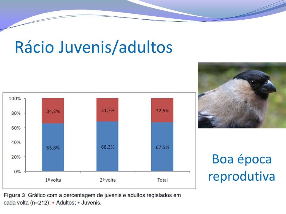 Rácio Juvenis/adultos