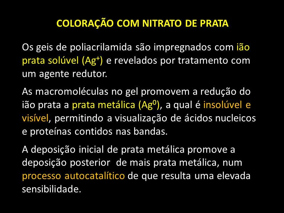 COLORAÇÃO COM NITRATO DE PRATA