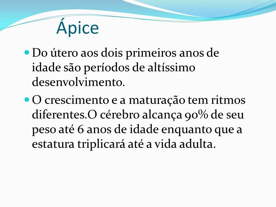 Ápice Do útero aos dois primeiros anos de idade são períodos de altíssimo desenvolvimento.