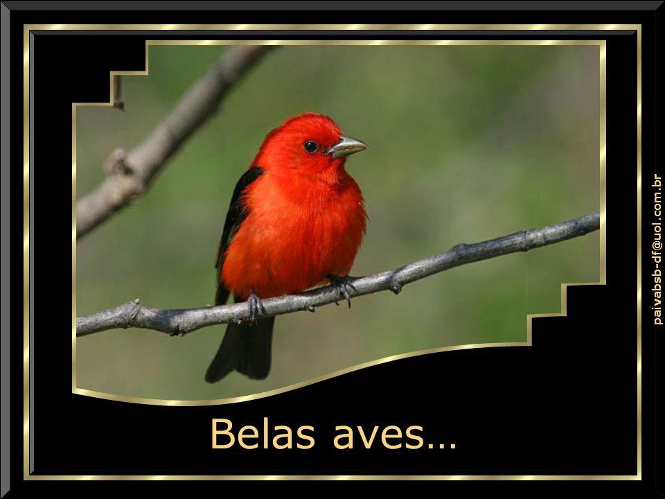 Belas aves…