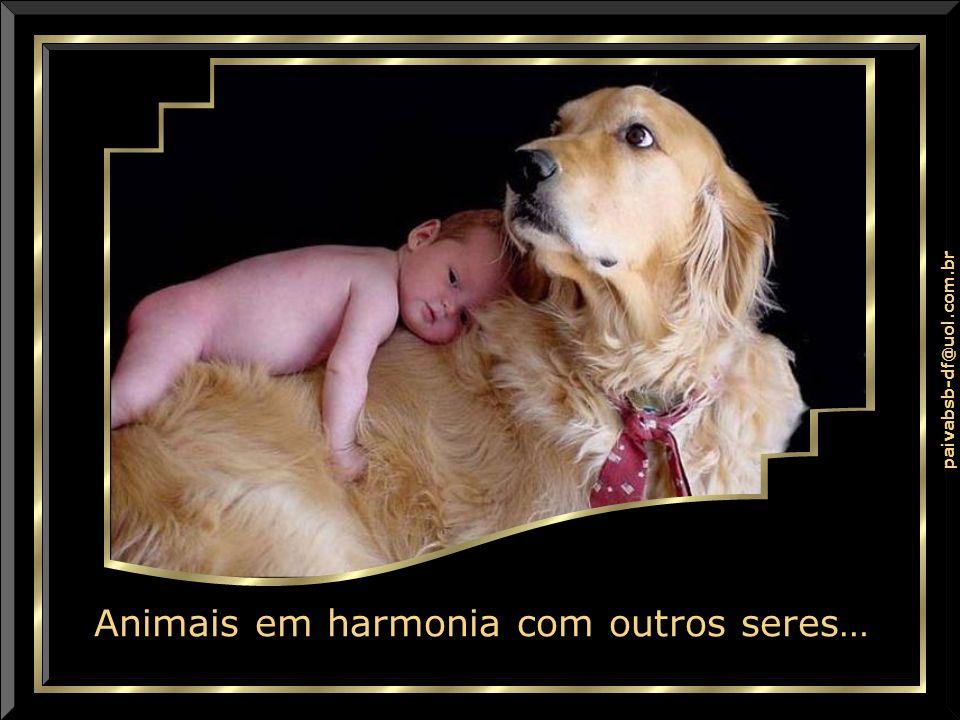 Animais em harmonia com outros seres…