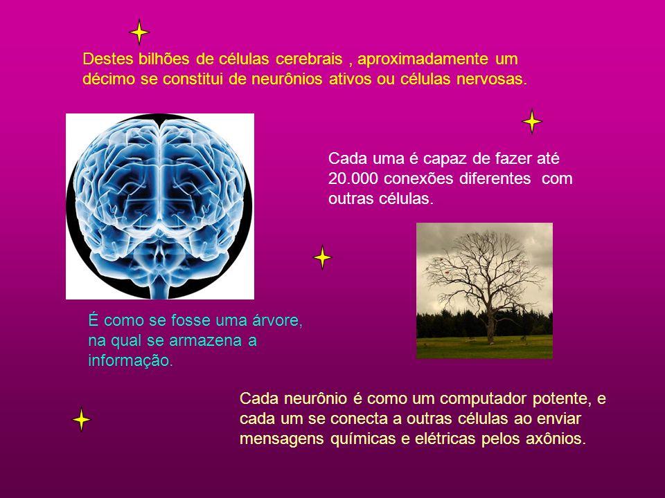 Destes bilhões de células cerebrais , aproximadamente um décimo se constitui de neurônios ativos ou células nervosas.