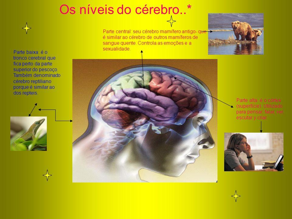 Os níveis do cérebro..*