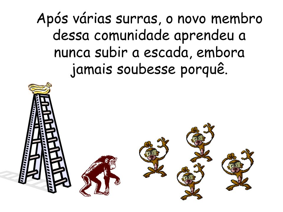 Após várias surras, o novo membro dessa comunidade aprendeu a nunca subir a escada, embora jamais soubesse porquê.