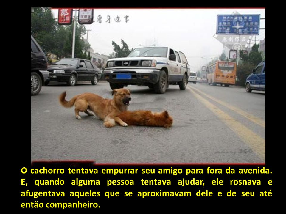 O cachorro tentava empurrar seu amigo para fora da avenida
