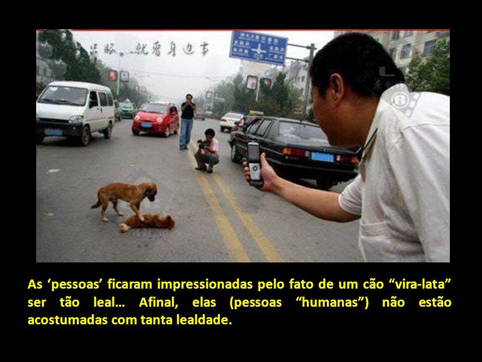 As 'pessoas' ficaram impressionadas pelo fato de um cão vira-lata ser tão leal… Afinal, elas (pessoas humanas ) não estão acostumadas com tanta lealdade.