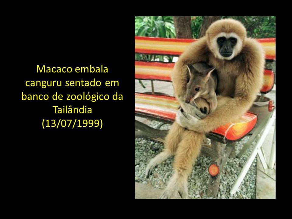 Macaco embala canguru sentado em banco de zoológico da Tailândia (13/07/1999)