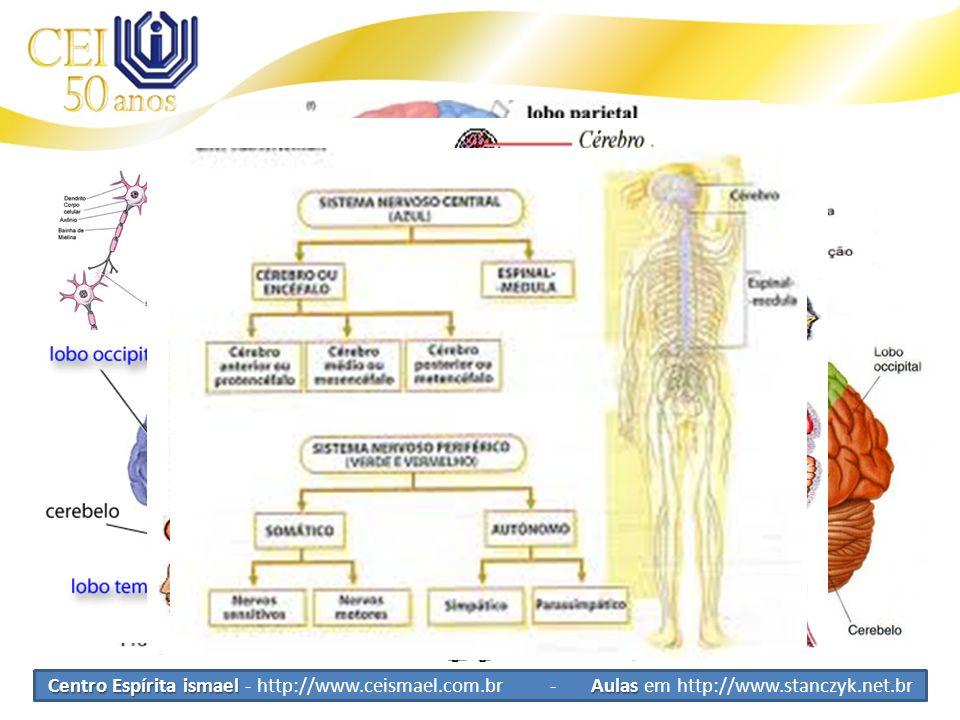 Sistema Nervoso SNVR SNVV