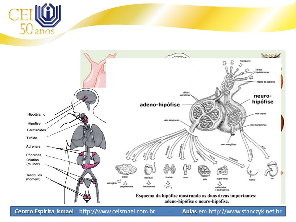 Sistema Endócrino Glândulas