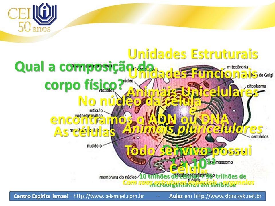 Qual a composição do corpo físico Unidades Funcionais