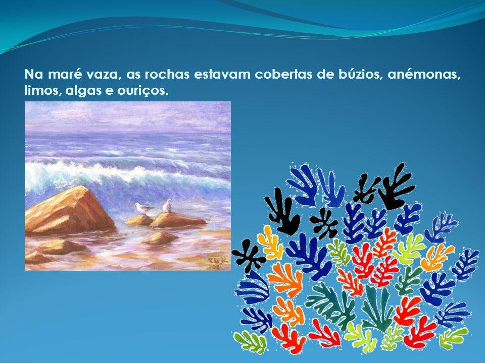 Na maré vaza, as rochas estavam cobertas de búzios, anémonas, limos, algas e ouriços.