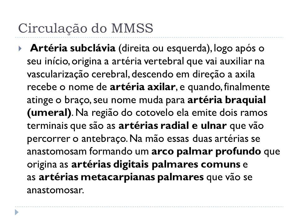 Circulação do MMSS