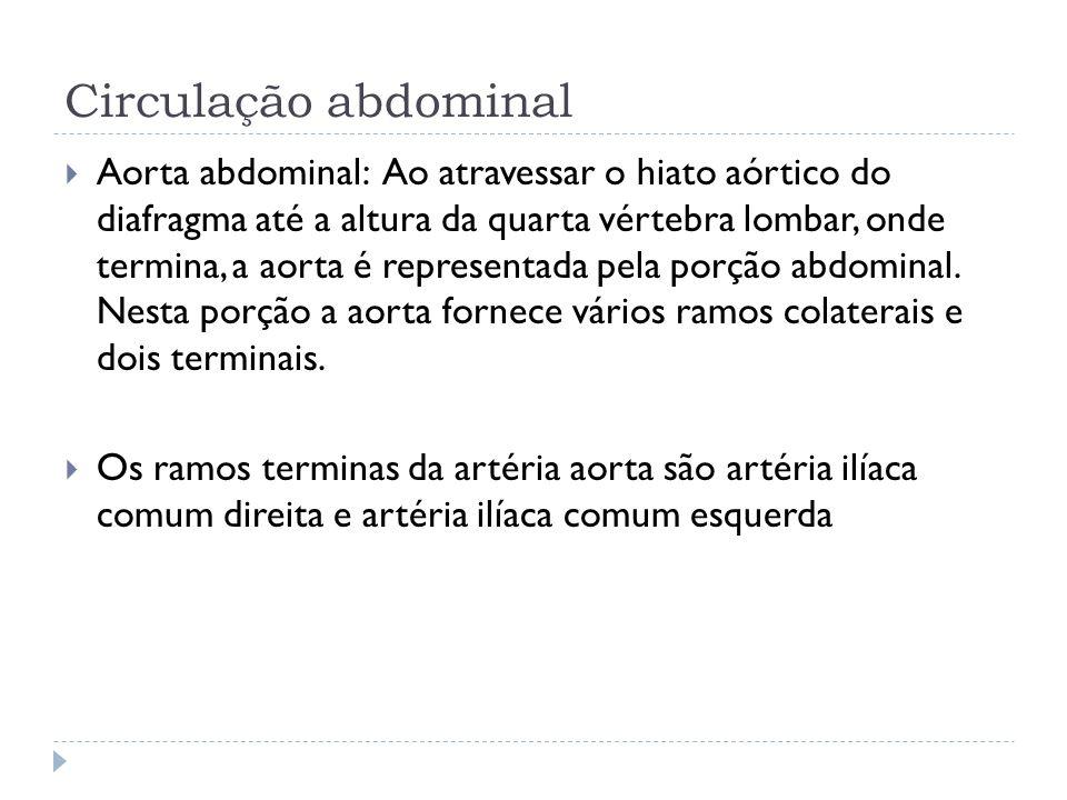 Circulação abdominal