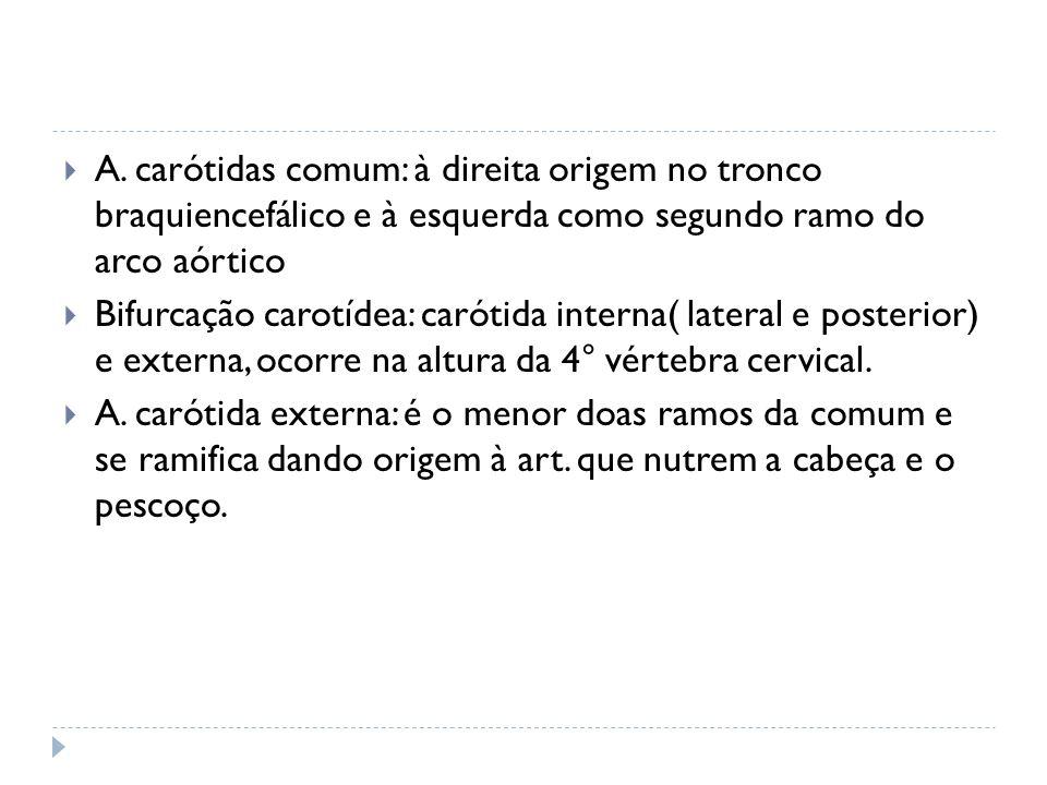 A. carótidas comum: à direita origem no tronco braquiencefálico e à esquerda como segundo ramo do arco aórtico