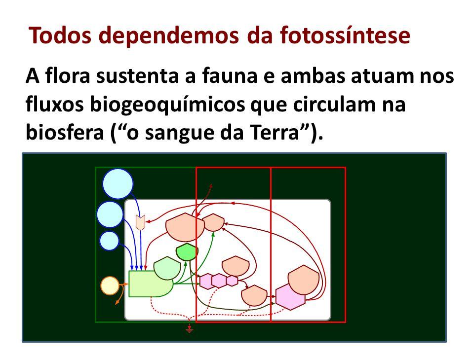 Todos dependemos da fotossíntese