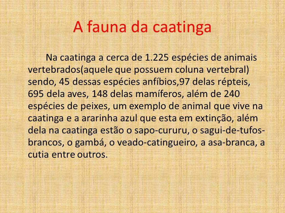 A fauna da caatinga