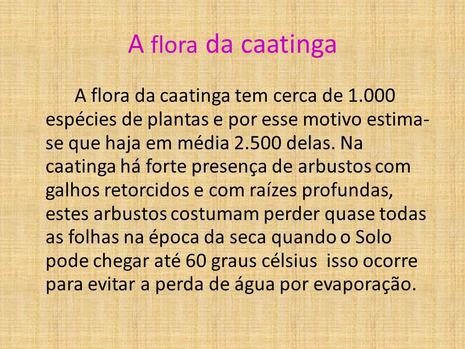 A flora da caatinga