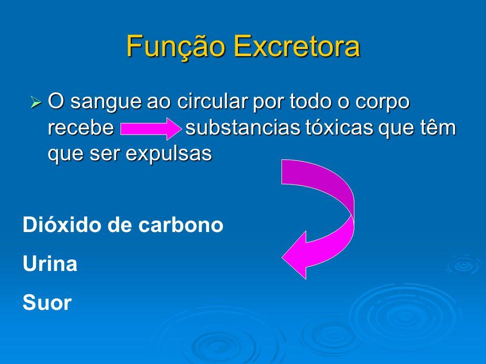 Função Excretora O sangue ao circular por todo o corpo recebe substancias tóxicas que têm que ser expulsas.
