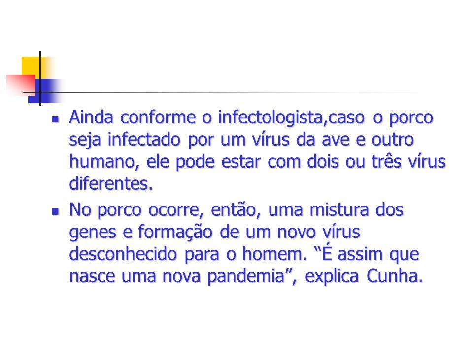 Ainda conforme o infectologista,caso o porco seja infectado por um vírus da ave e outro humano, ele pode estar com dois ou três vírus diferentes.