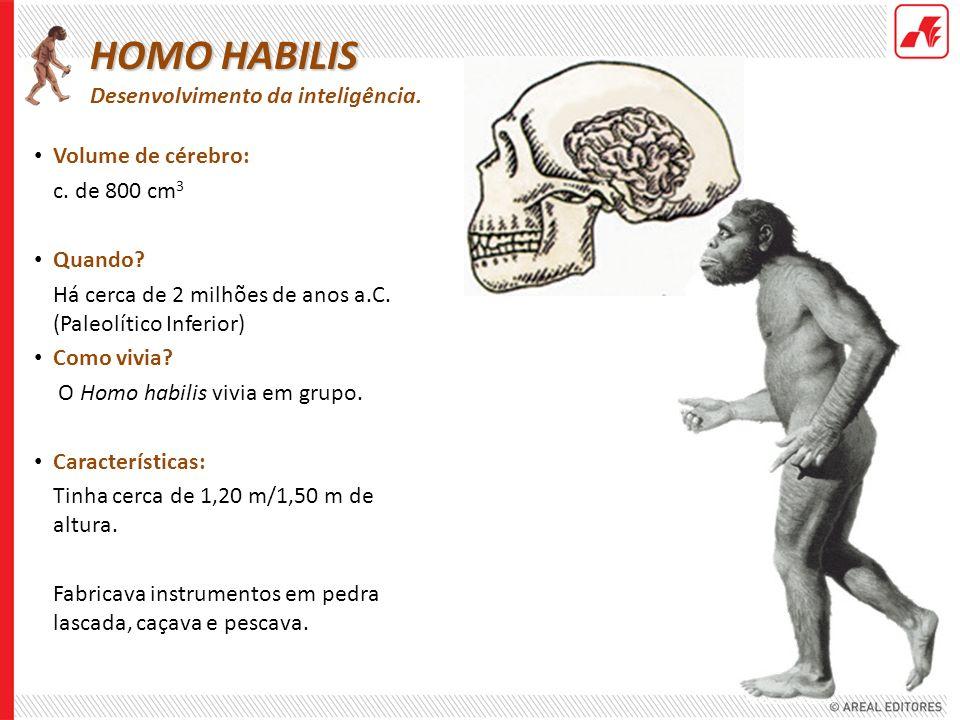 HOMO HABILIS Desenvolvimento da inteligência.