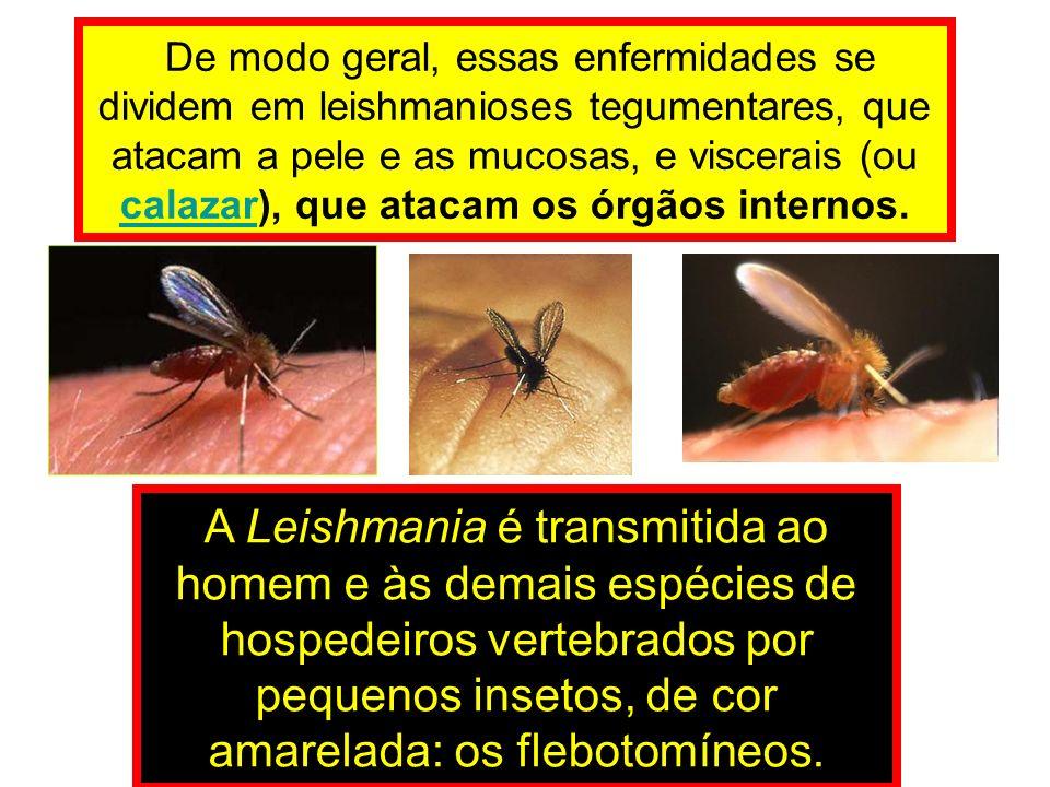 De modo geral, essas enfermidades se dividem em leishmanioses tegumentares, que atacam a pele e as mucosas, e viscerais (ou calazar), que atacam os órgãos internos.