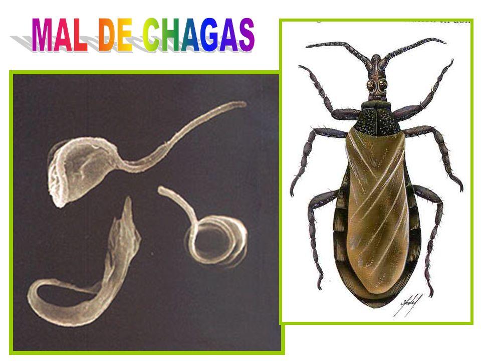 MAL DE CHAGAS