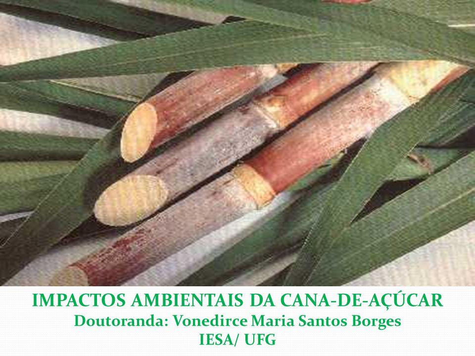 IMPACTOS AMBIENTAIS DA CANA-DE-AÇÚCAR Doutoranda: Vonedirce Maria Santos Borges IESA/ UFG