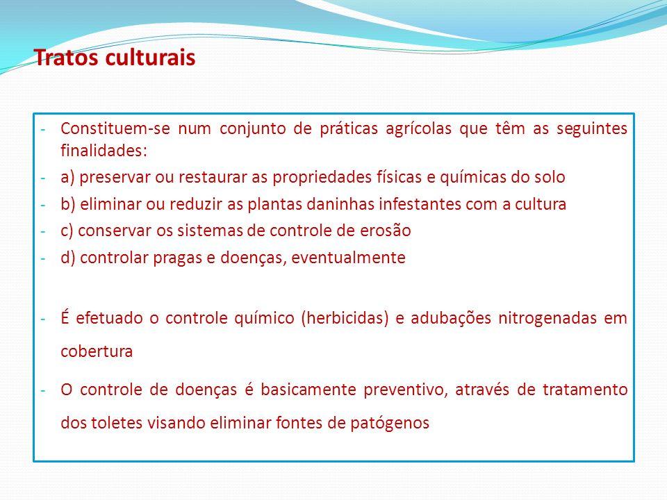 Tratos culturais Constituem-se num conjunto de práticas agrícolas que têm as seguintes finalidades: