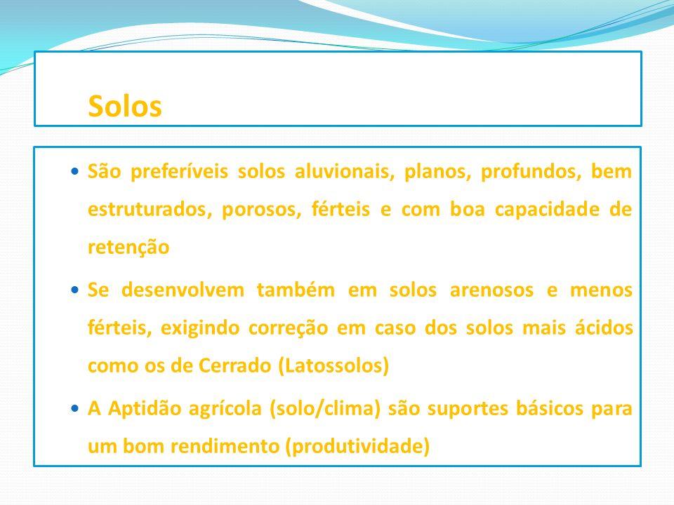 Solos São preferíveis solos aluvionais, planos, profundos, bem estruturados, porosos, férteis e com boa capacidade de retenção.