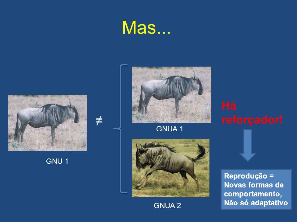 Mas... ≠ Há reforçador! GNUA 1 GNU 1