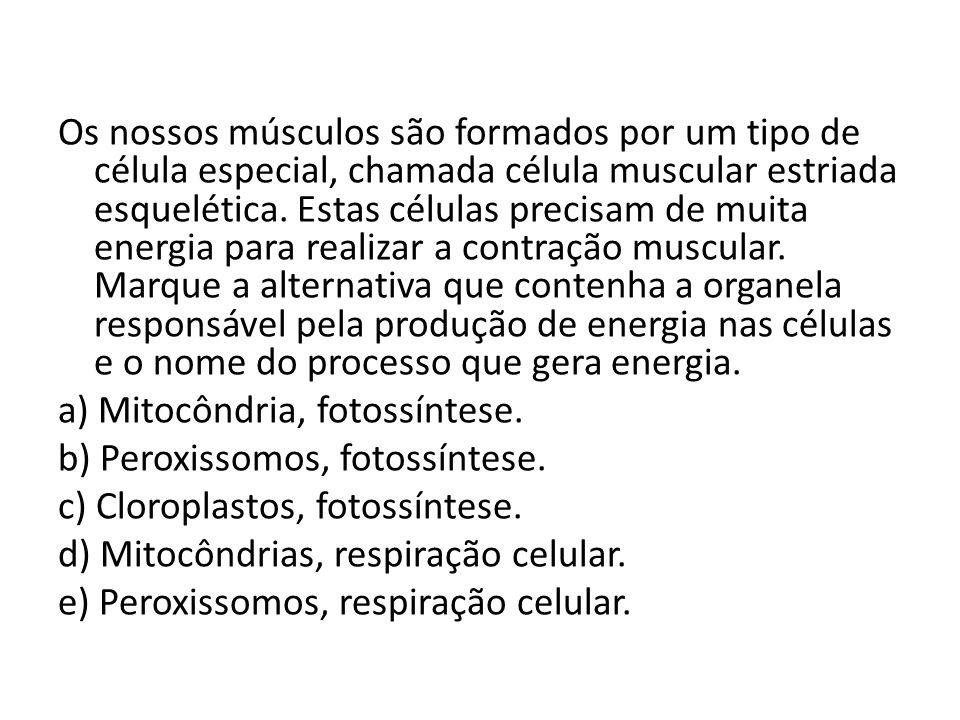 Os nossos músculos são formados por um tipo de célula especial, chamada célula muscular estriada esquelética.