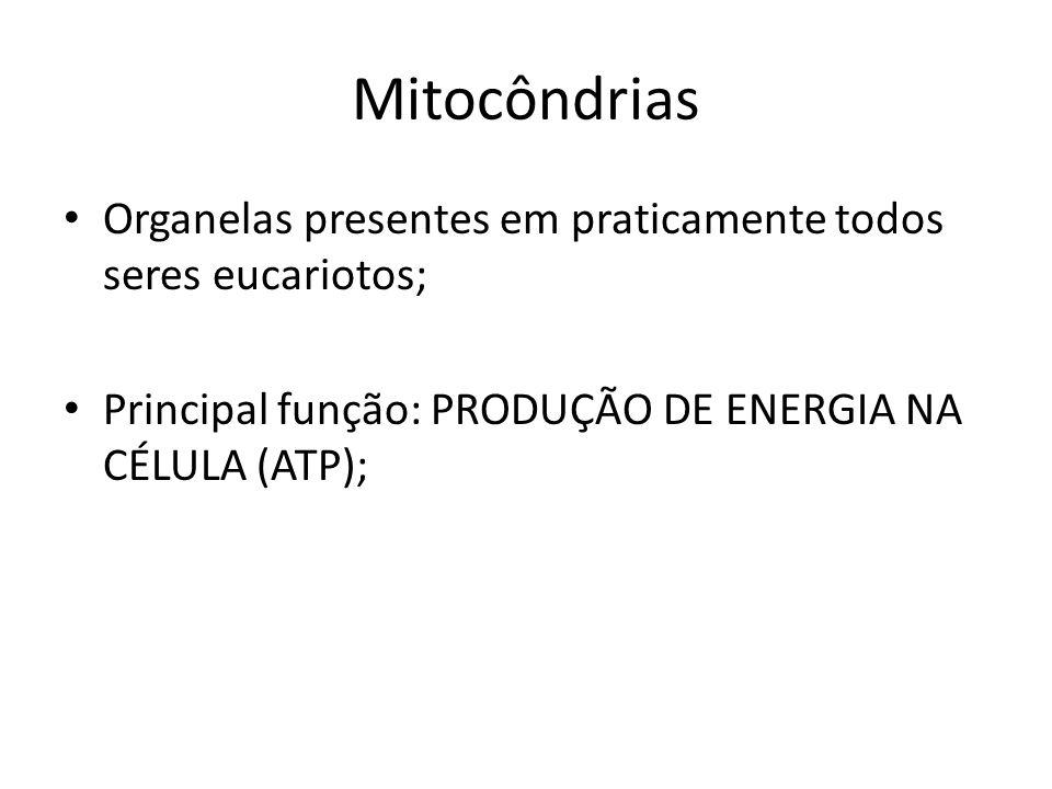 Mitocôndrias Organelas presentes em praticamente todos seres eucariotos; Principal função: PRODUÇÃO DE ENERGIA NA CÉLULA (ATP);
