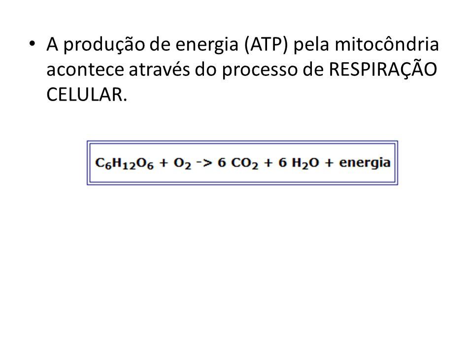 A produção de energia (ATP) pela mitocôndria acontece através do processo de RESPIRAÇÃO CELULAR.