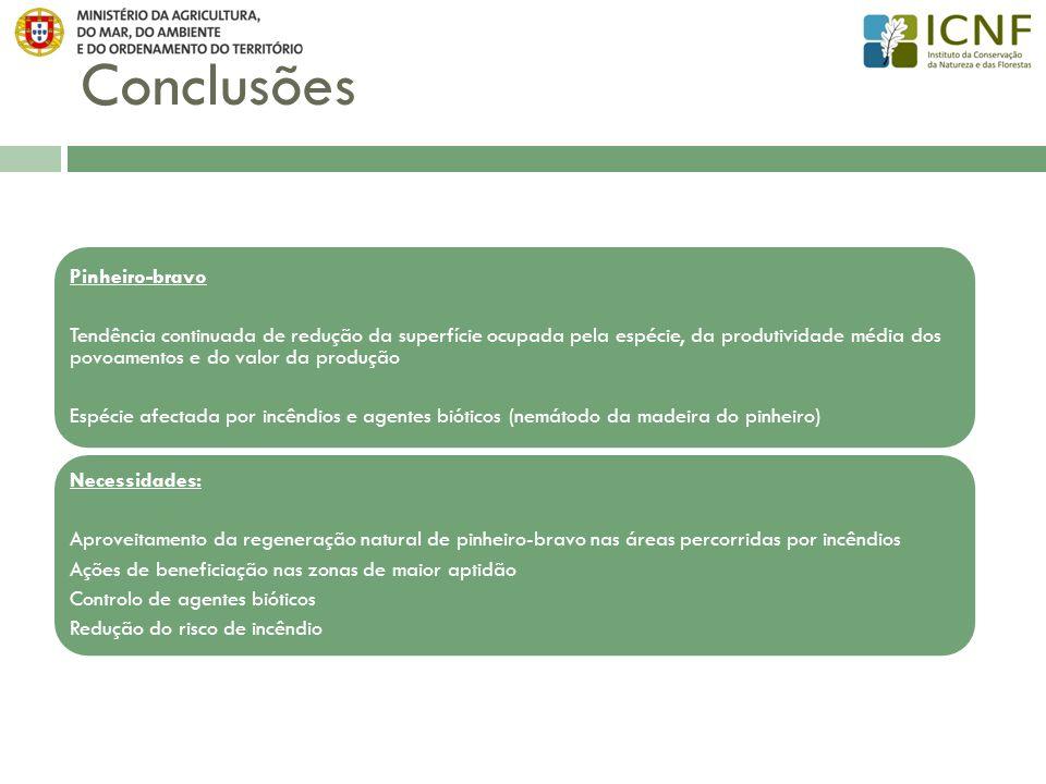 Conclusões Pinheiro-bravo
