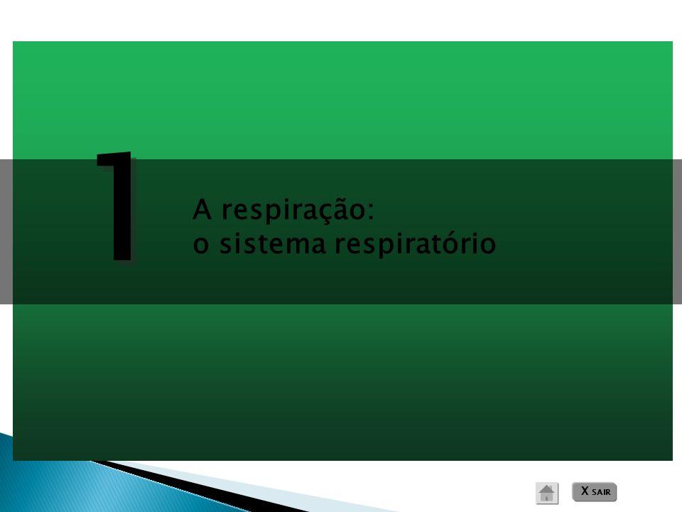 1 A respiração: o sistema respiratório X SAIR