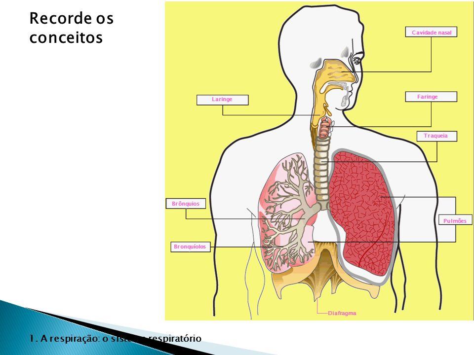 Recorde os conceitos 1. A respiração: o sistema respiratório