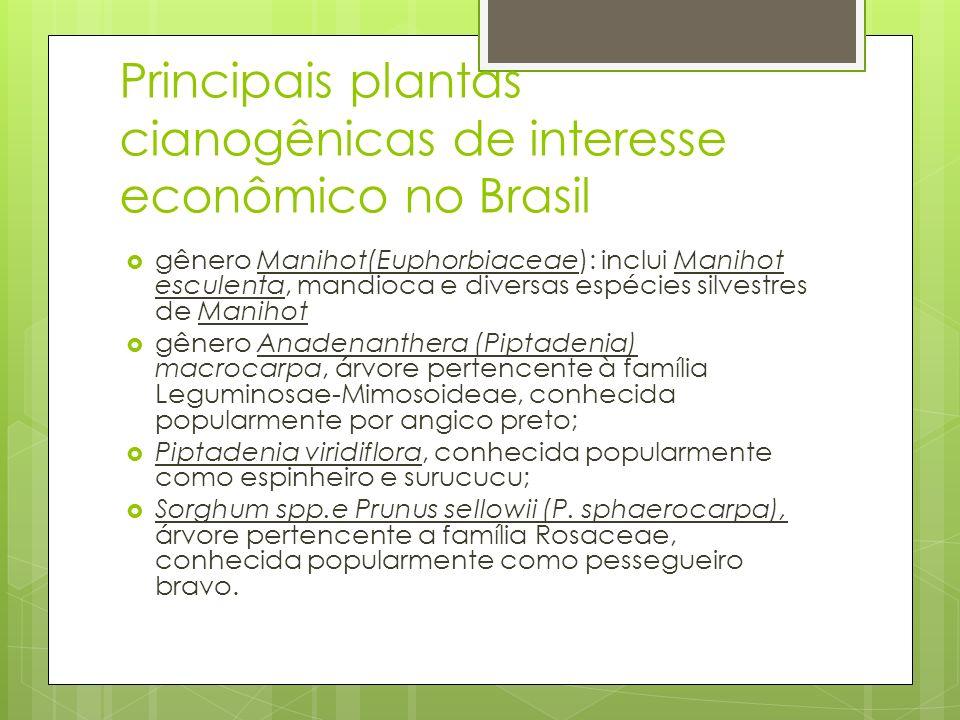 Principais plantas cianogênicas de interesse econômico no Brasil