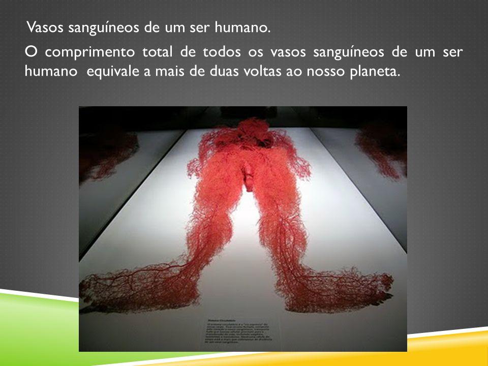 Vasos sanguíneos de um ser humano