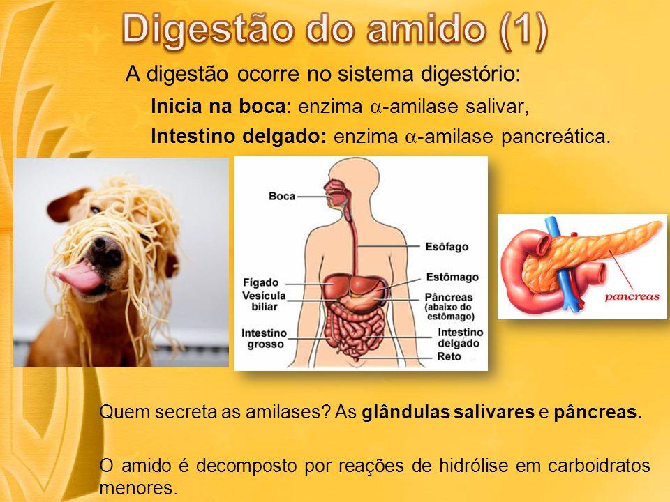 Digestão do amido (1) A digestão ocorre no sistema digestório: