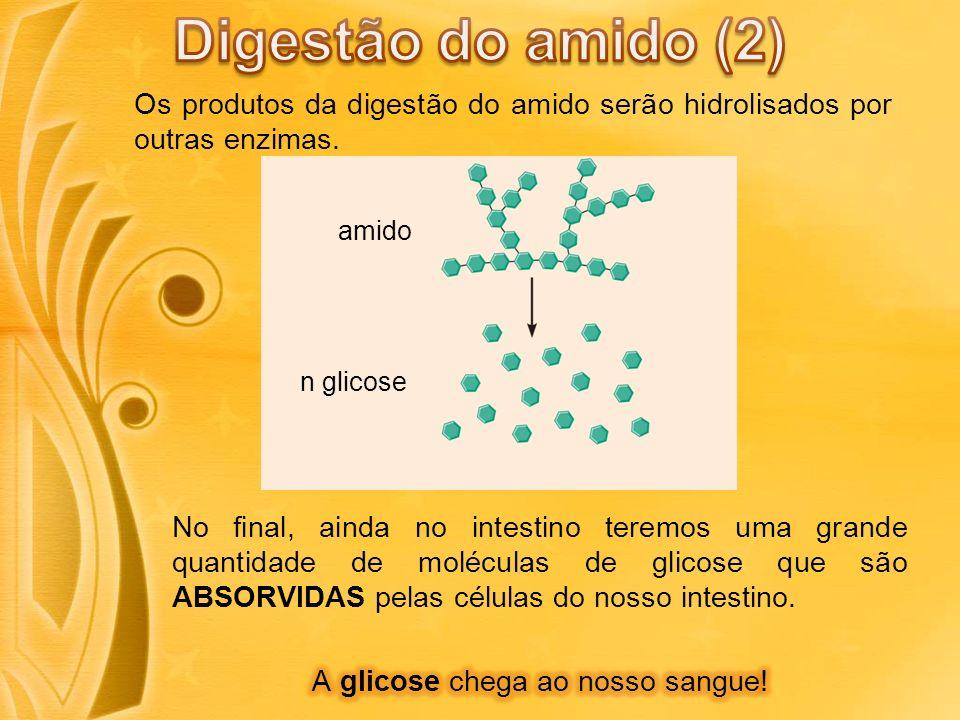 Digestão do amido (2) Os produtos da digestão do amido serão hidrolisados por outras enzimas. amido.