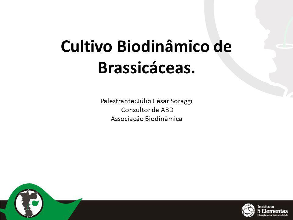 Cultivo Biodinâmico de Brassicáceas.