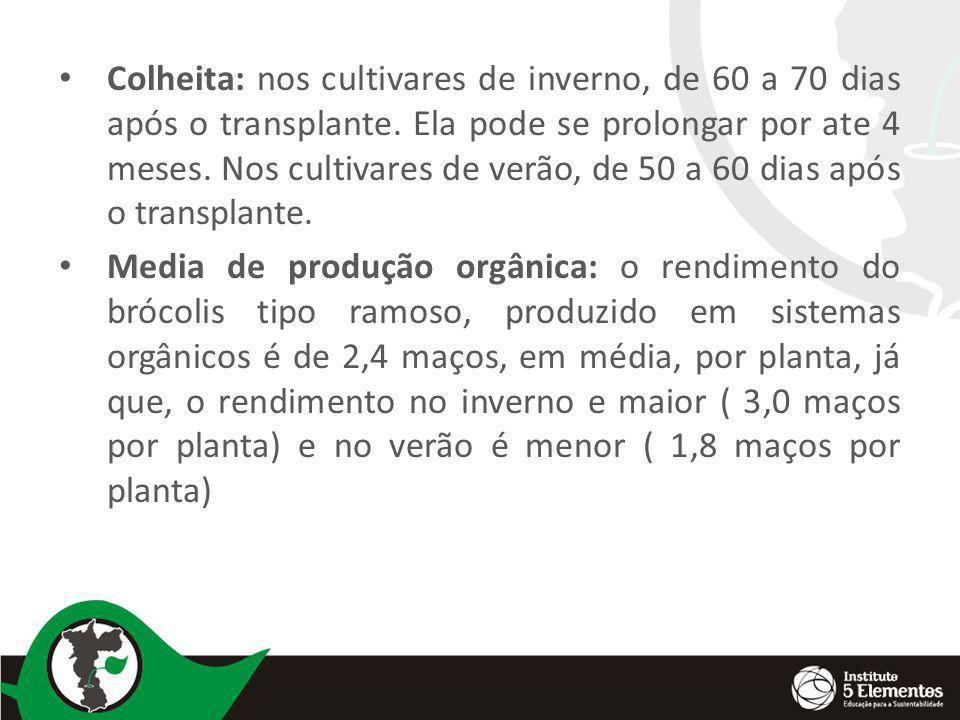 Colheita: nos cultivares de inverno, de 60 a 70 dias após o transplante. Ela pode se prolongar por ate 4 meses. Nos cultivares de verão, de 50 a 60 dias após o transplante.